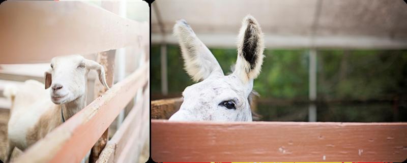 Donkey Dana