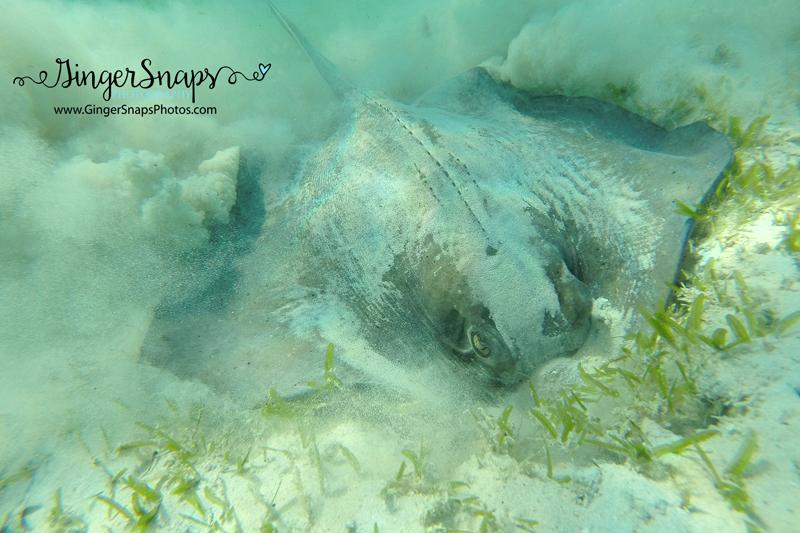 Amazing snorkeling!!